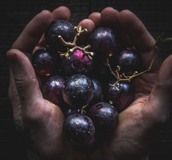 Muscadines for muscadine wine recipe