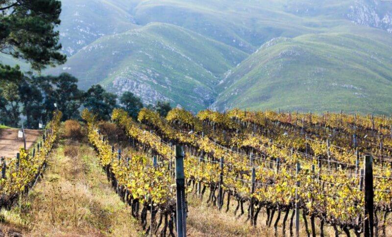 Peruvian-Vineyards