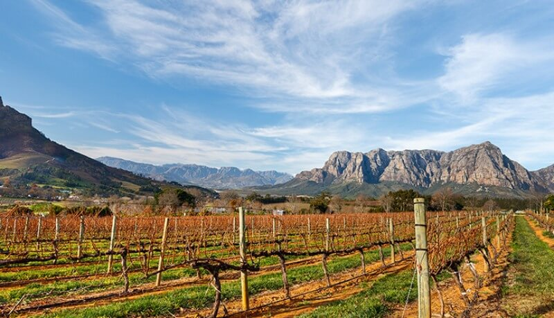 Vineyards-in-South-Africa